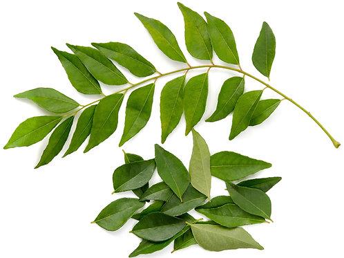 3 Curryblätter-Zweige