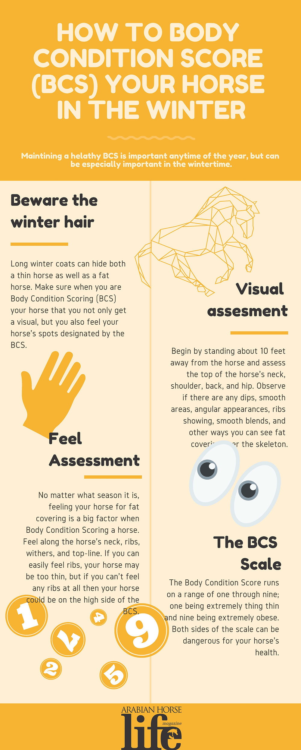 How to Body Condition Score Your Horse in the Winter