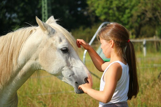 Coronavirus: Can Horses be Affected?