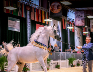 It's Time for the Scottsdale Arabian Horse Show