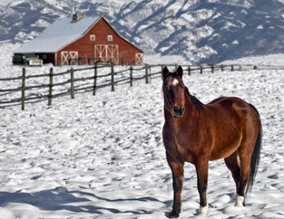 Winterizing Your Farm