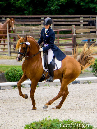 Damsels in Dressage - Part 2