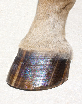 When a Hoof Conditioner is Really Necssary