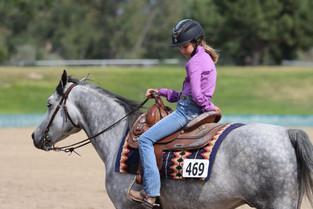 5 Tips on Horse Buying From An Equine Lawyer
