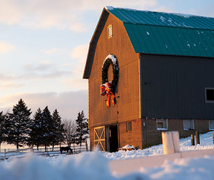 Adding Christmas Cheer to the Farm