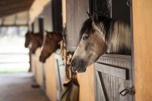 Barn Essentials for Care of Horses