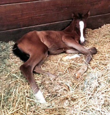 Ten Tips for Your New Foal
