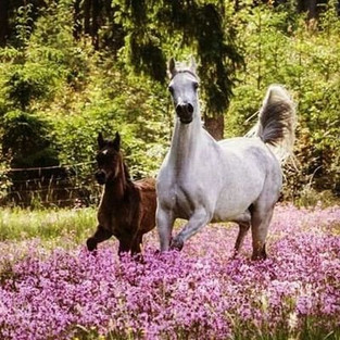 Spring Tips for Horse Owners