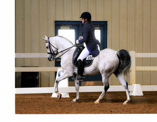 Damsels in Dressage - Part 1