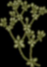 Botany%2520%2520%2520%2520%2520%2520%252