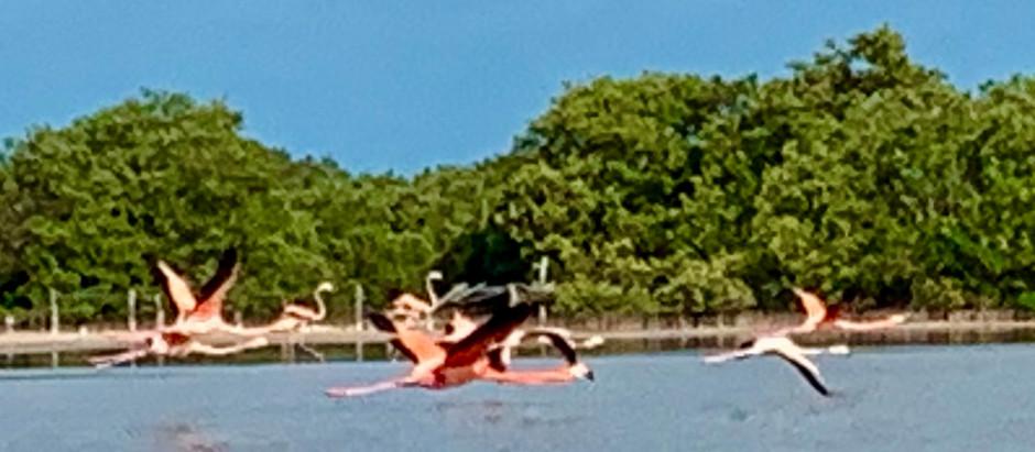 Yucatan Flamingo Adventure
