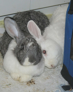 Alfie (RIP) and Queenie (RIP)