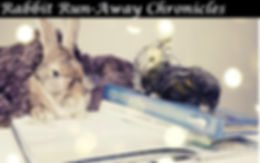 Rabbit Run-Away Chronicles.jpg