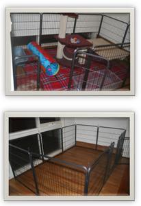 Basic setup for house rabbit