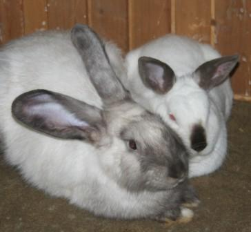 Hugo & Ellie