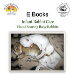 HRS baby rabbits-cover_edited.jpg