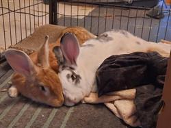 Hopper & Shirley