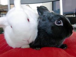Bunny & Tofu