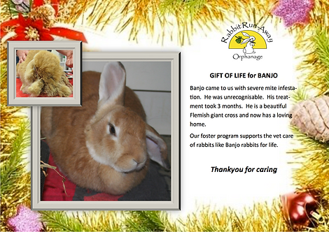 Gift of Life: Banjo