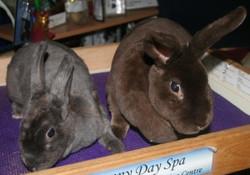 Bobo (RIP) & Mitsy (RIP)