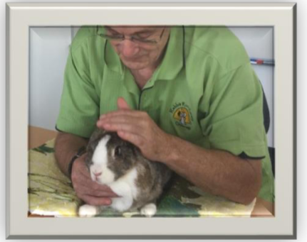 Critical Care for Rabbits