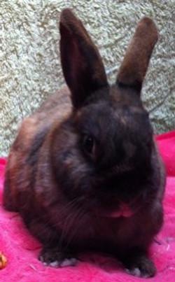Mr Bunny (RIP)