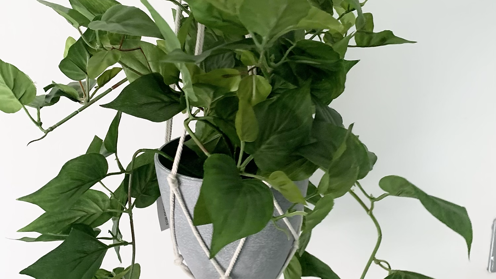 Hanging Philodendron Faux Plant