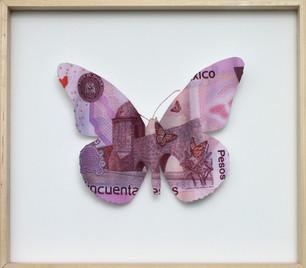 Mexico_Bigbill_butterfly.jpg