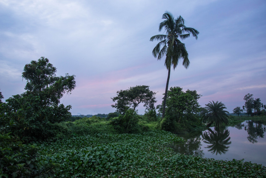 KrishanuNagar_Wetlands-9.jpg