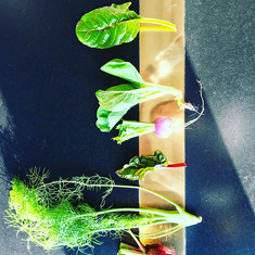 Une nouvelle collaboration avec la ferme d'Artaud, merci Hélène pour cette beauté, résultat d'une exigence quotidienne.jpg