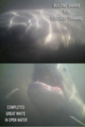 Shark complete 8924792129708_n.jpg