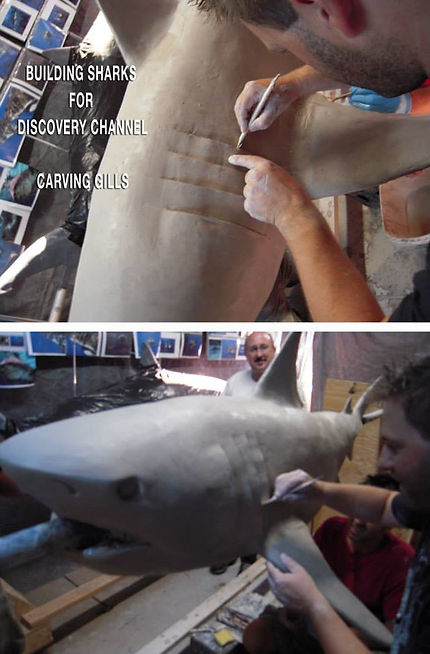 Shark gills 564202782543_n.jpg