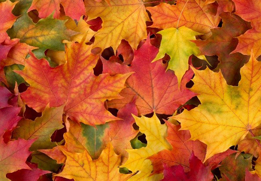 Fall Beauty Treats & Tricks