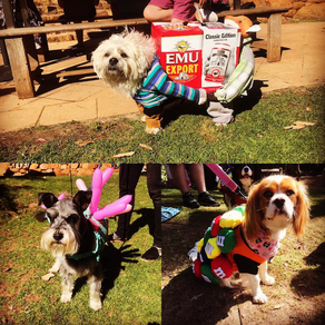 Dog-tober Fest