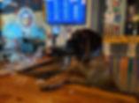 dog behind bar.jpg