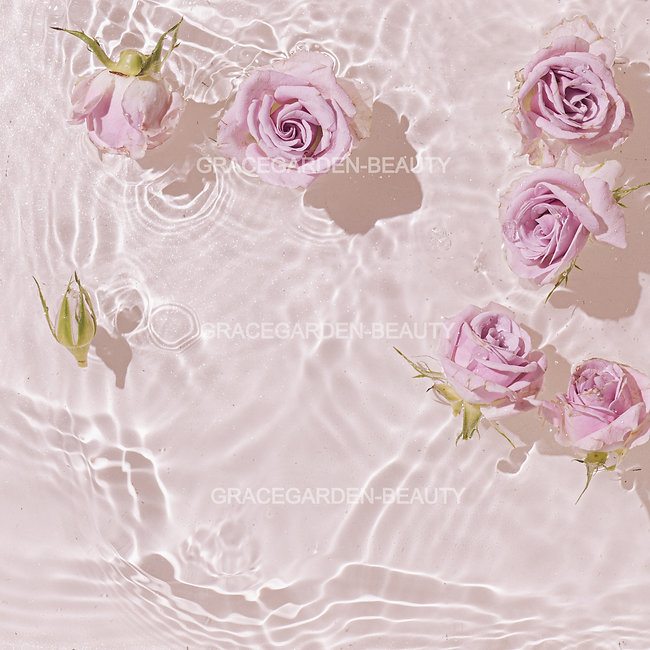 Summer scene with pink rose flowers in water. Sun and shadows. Minimal nature background_e