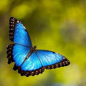 caterpillar-moth-butterfly-before-after-