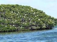 rando jet-ski mangrove