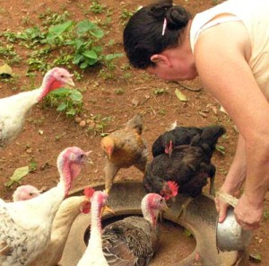 Forco for Chickens & Turkeys?