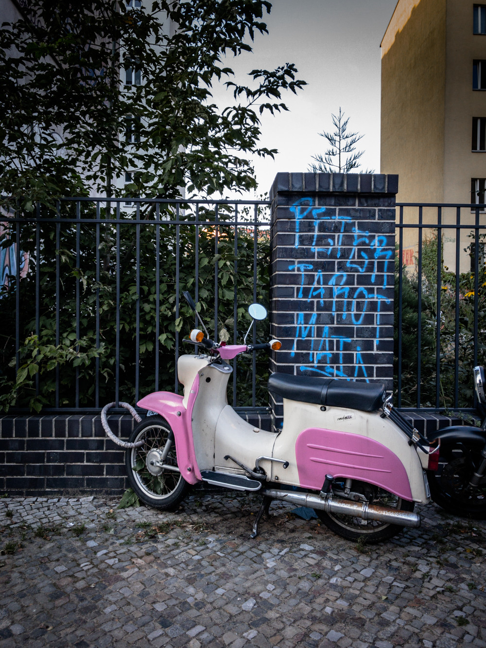 Schwalbe in Farbe (pink)