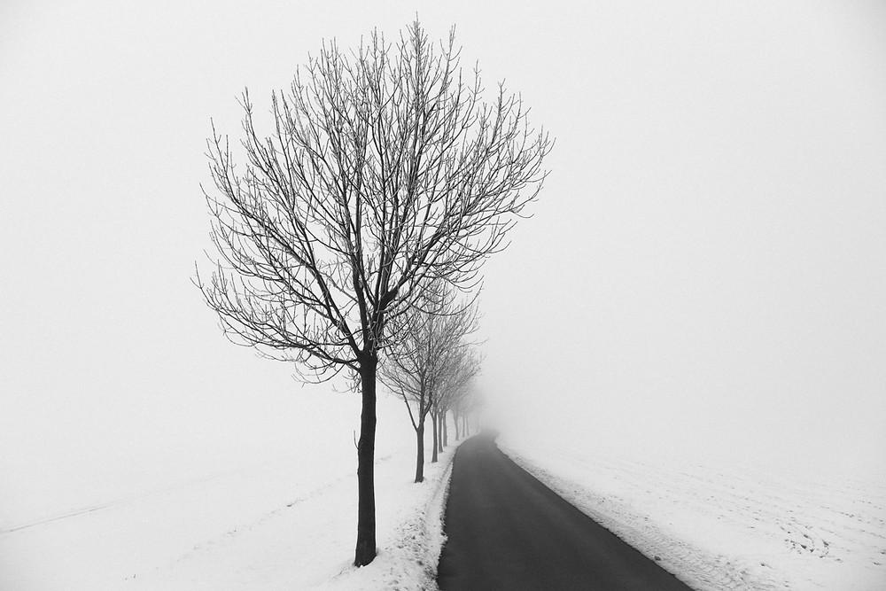 Nebel / Straße
