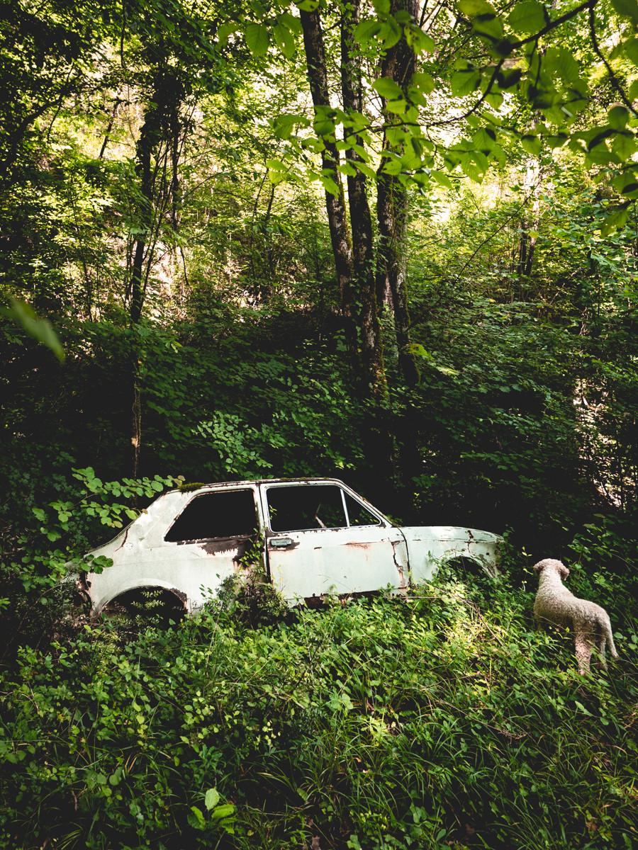 Altes Auto im Wald mit Hund Candy