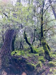 enchanted trees moss.jpeg
