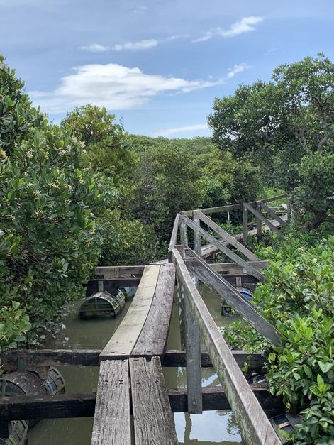 Boardwalk in between mangrove forests