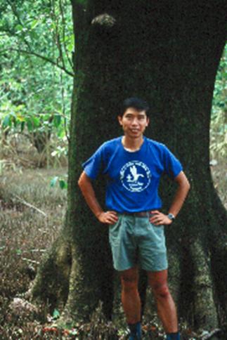 Giant Mangrove Tree