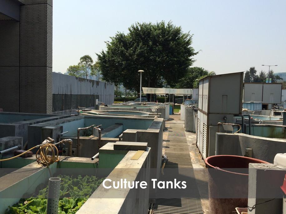 Culture Tanks 1 GIMP.jpg