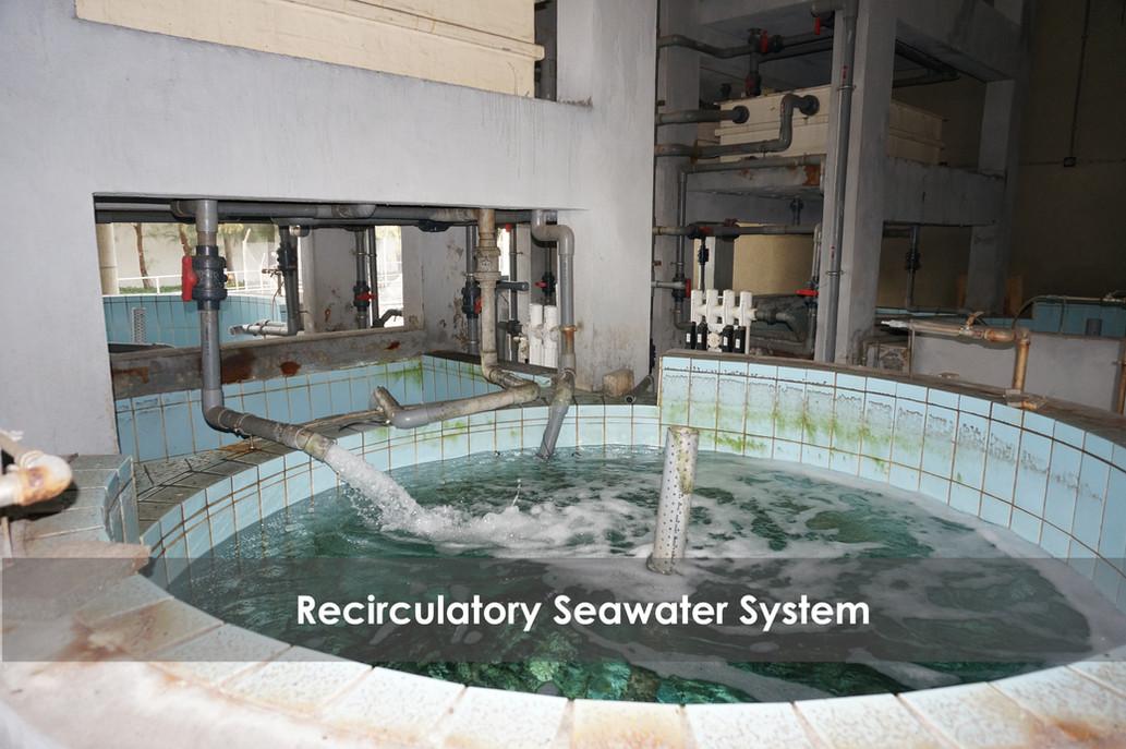 Recirculatory seawater system GIMP.jpg
