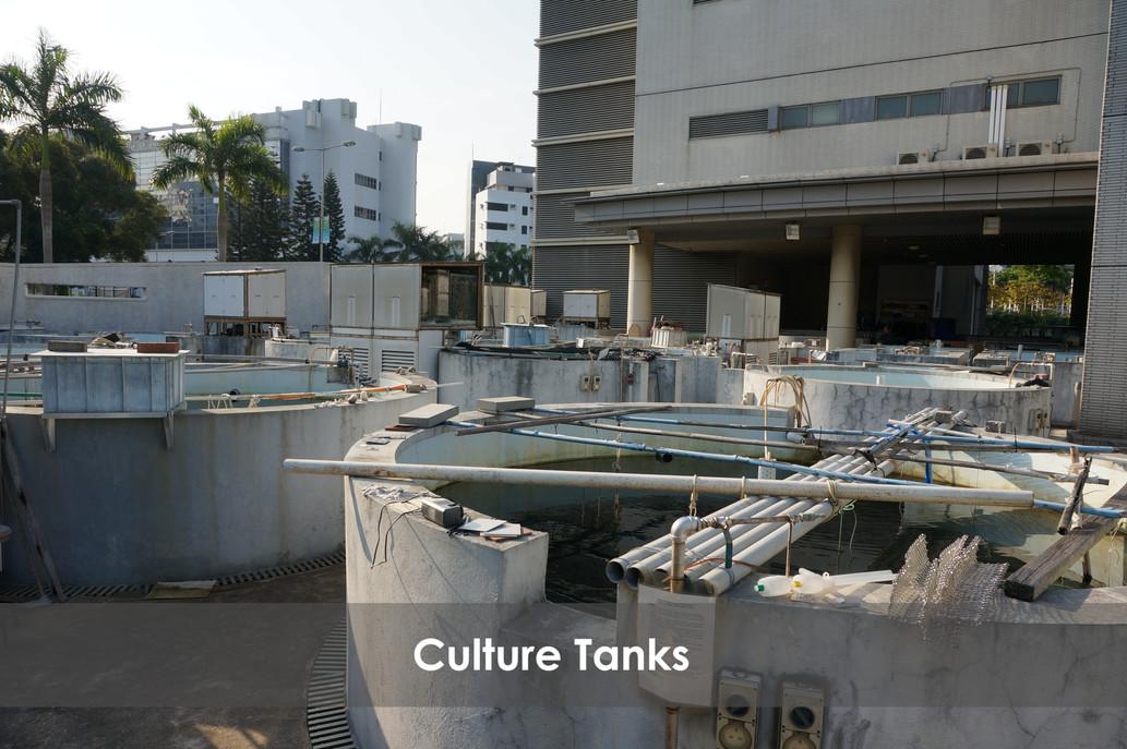 Culture Tanks 2 GIMP.jpg