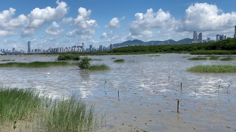 An ordinary day at Mai Po mudflat