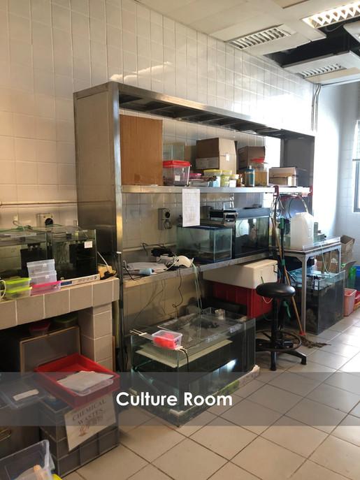 Culture Room GIMP.jpg